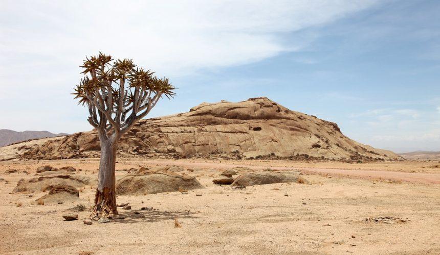 Sudan: guerra, siccità ed emergenza umanitaria